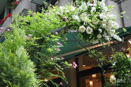 松本楼のバラIMG_0034
