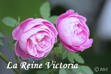 ラ・レーヌ・ビクトリア12IMG_7993
