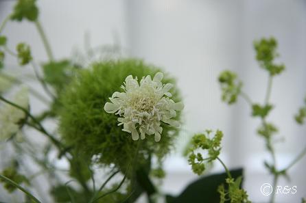花瓶の花9IMG_8656