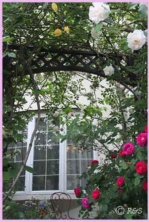 バラの庭2008-2