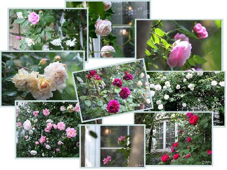 バラの庭2008