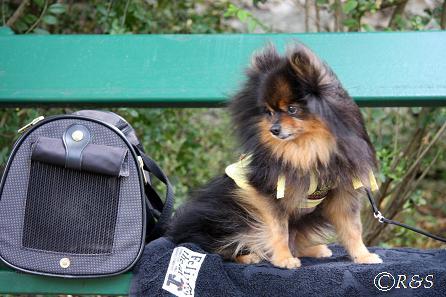 旅行中-バガテル公園のベル1IMG_3048