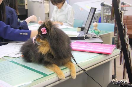 b成田動物検疫所のベル1IMG_8765