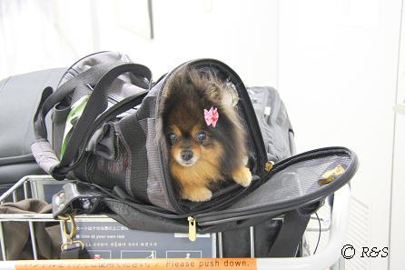 b成田動物検疫所のベル9IMG_8783