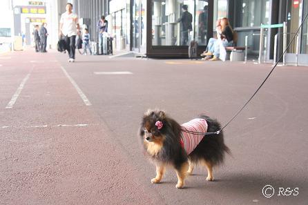 c成田空港で散歩1IMG_8808