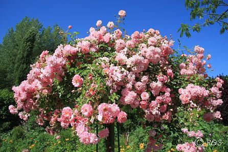 iモネの庭9IMG_9935