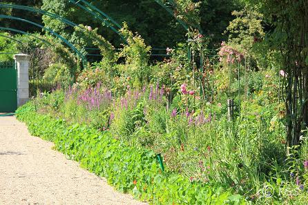 iモネの庭13IMG_9956
