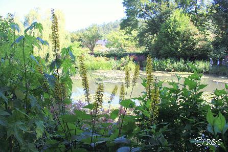 kモネの池12IMG_9902
