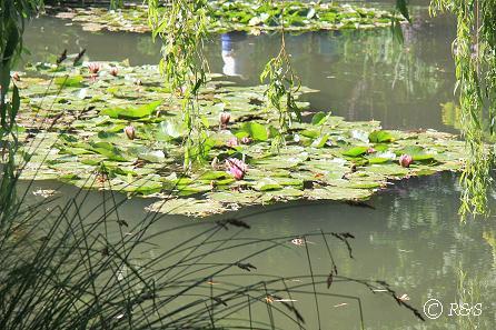 kモネの池21IMG_9924