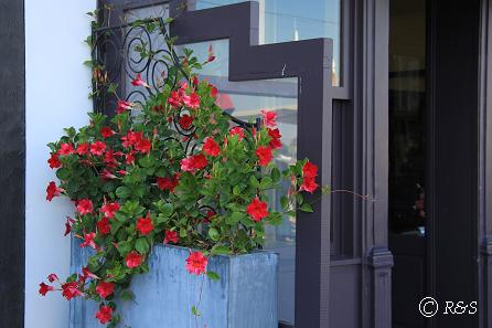 fオンフルール街角の花8IMG_0137