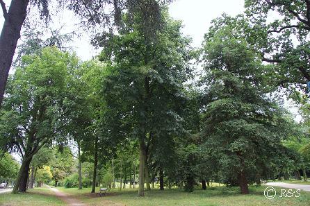 cバガテル公園への道9IMG_2811