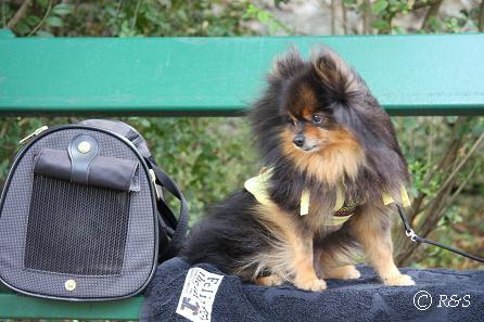 oバガテル公園ー外のベンチのベル3IMG_3048