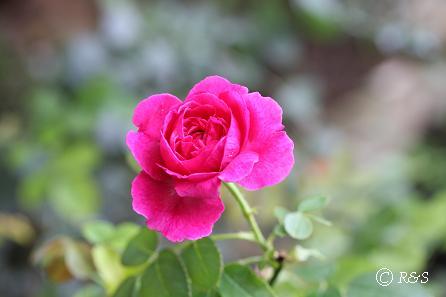 l庭のウィリアム・シェークスピア1IMG_3846