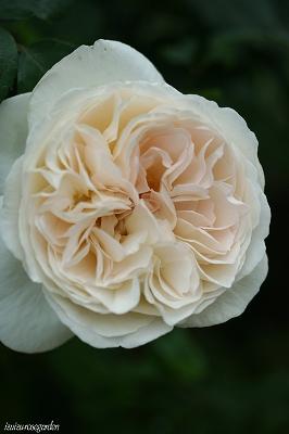 pure roses sebastian kneipp. Black Bedroom Furniture Sets. Home Design Ideas