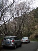 山桜の咲く城山へ