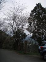 山桜の咲く城山へ2