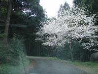 桜の咲く城山への道03