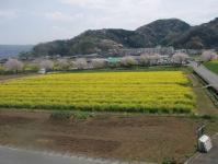 桜の咲く城山への道04