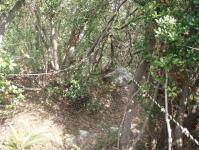 城山山頂からクッキングワールドへの下降路