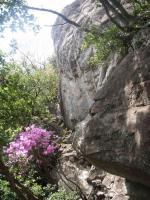 クッキングワールド中の岩01