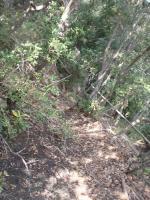 クッキングワールドからワイルドキャットゴージへの懸垂下降路