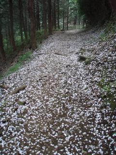 花散る城山のアプローチ01
