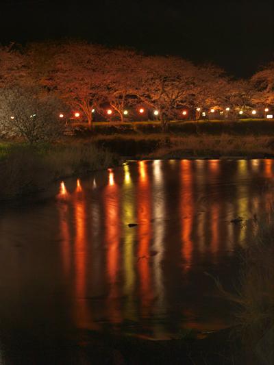 西伊豆松崎町 那賀川の夜桜ライトアップ2
