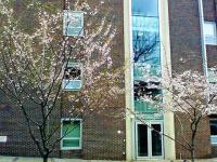 例の勘違い桜