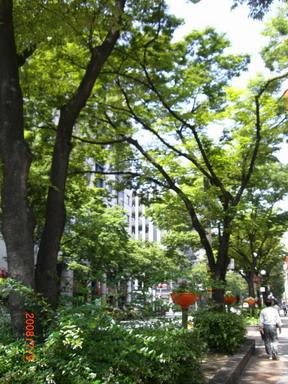 博多駅前通り
