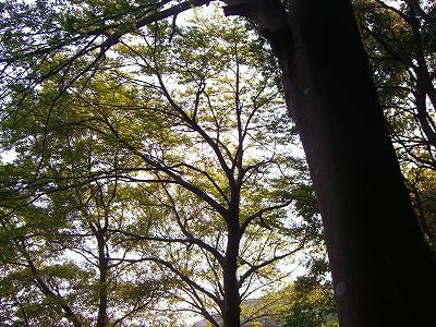 初夏の木々。