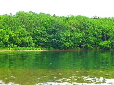 阿寒湖の緑。