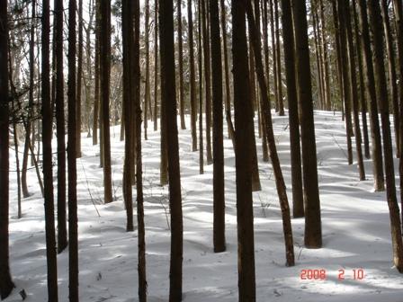 木漏れ日 056