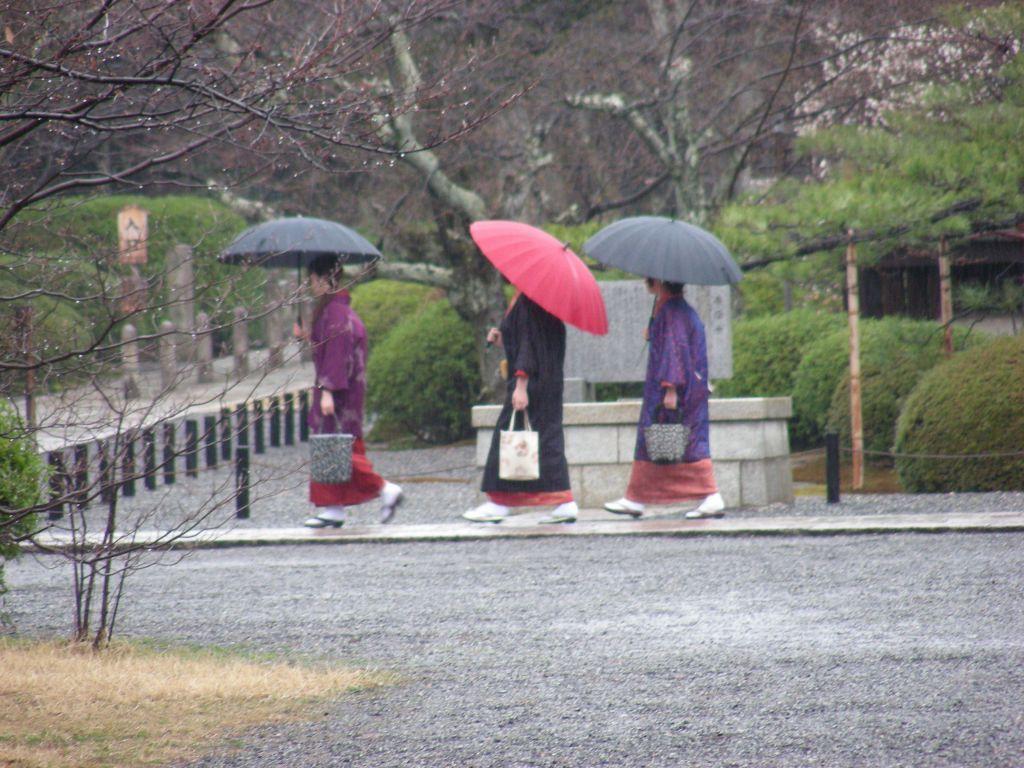 御所桃、宇多野桜、太秦 221