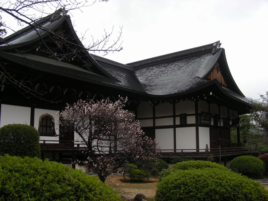 御所桃、宇多野桜、太秦 257