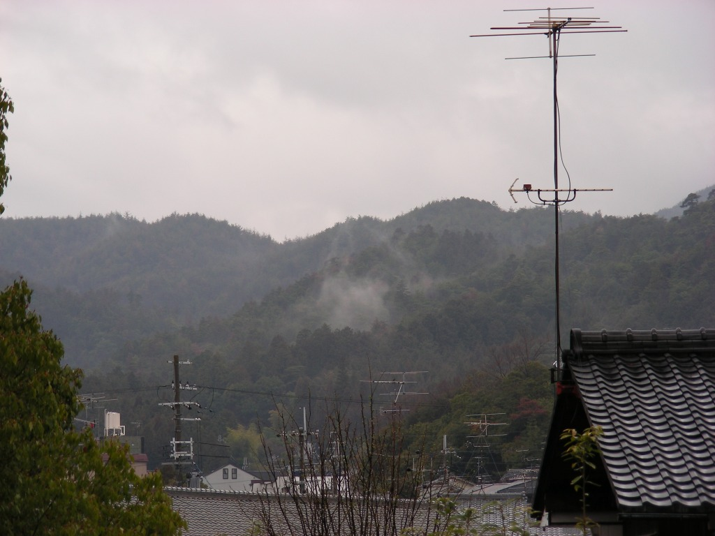 御所桃、宇多野桜、太秦 180