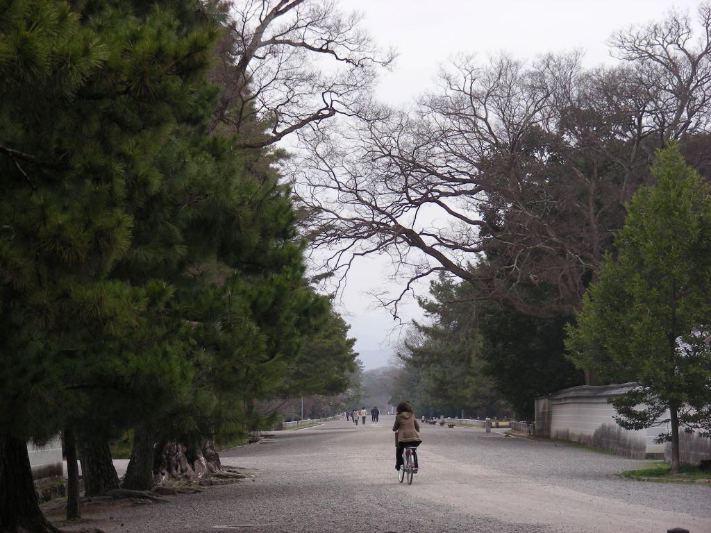 御所桃、宇多野桜、太秦 092