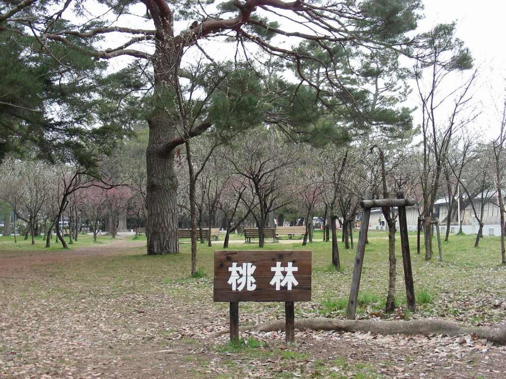 御所桃、宇多野桜、太秦 110