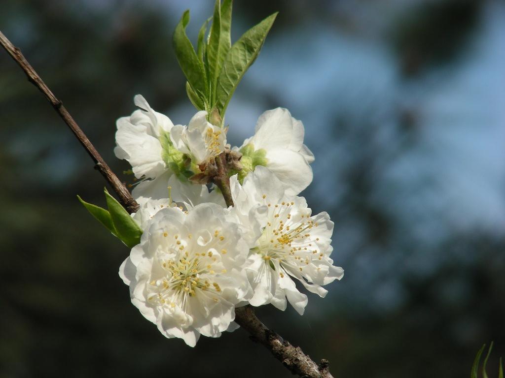 福岡 036