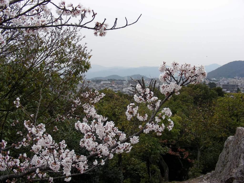 疎水・松ヶ崎・船岡・鳴滝桜 132