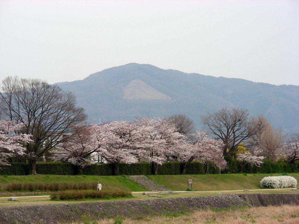 疎水・松ヶ崎・船岡・鳴滝桜 175