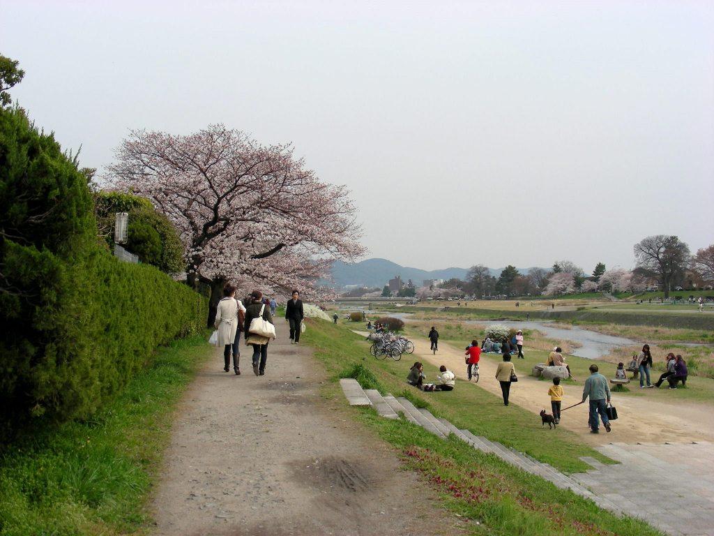 疎水・松ヶ崎・船岡・鳴滝桜 189