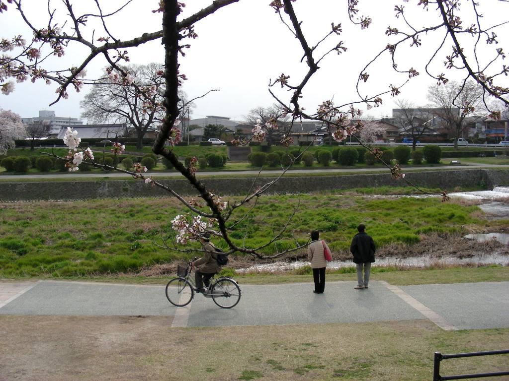 疎水・松ヶ崎・船岡・鳴滝桜 190