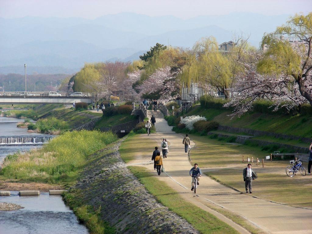 疎水・松ヶ崎・船岡・鳴滝桜 067