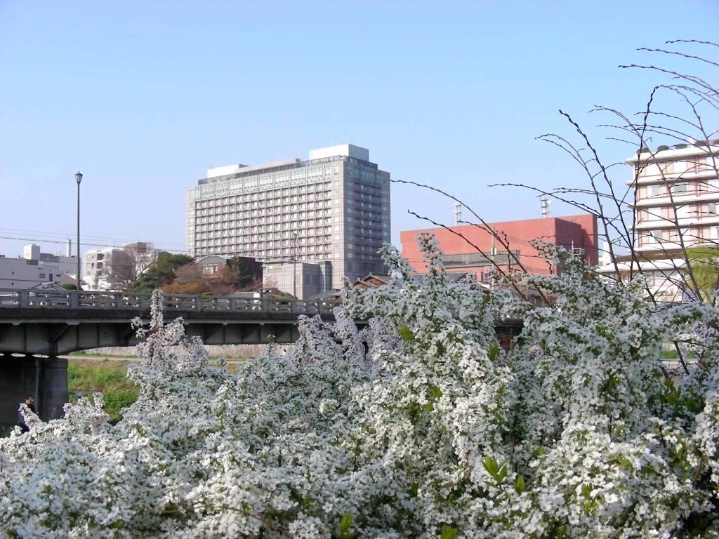 疎水・松ヶ崎・船岡・鳴滝桜 062