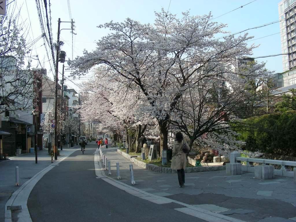 疎水・松ヶ崎・船岡・鳴滝桜 078