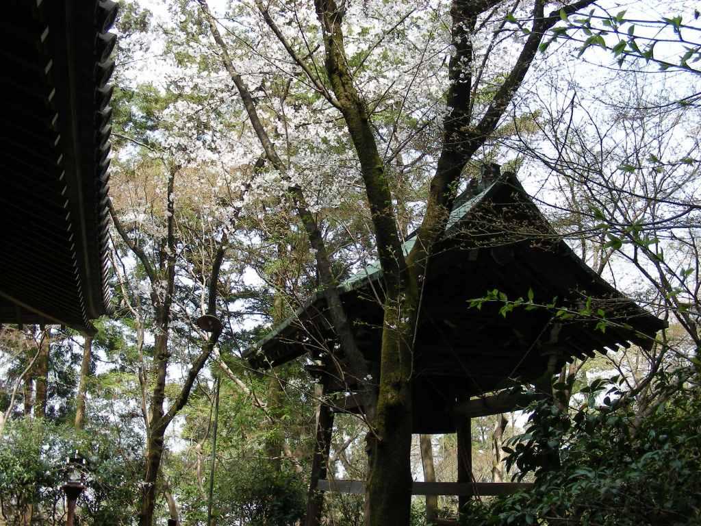 桜・円山、真如、哲学 074