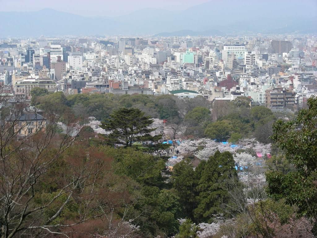 桜・円山、真如、哲学 082