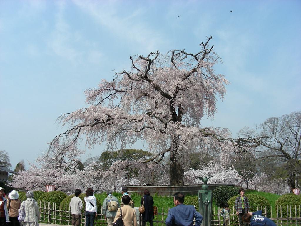 桜・円山、真如、哲学 052