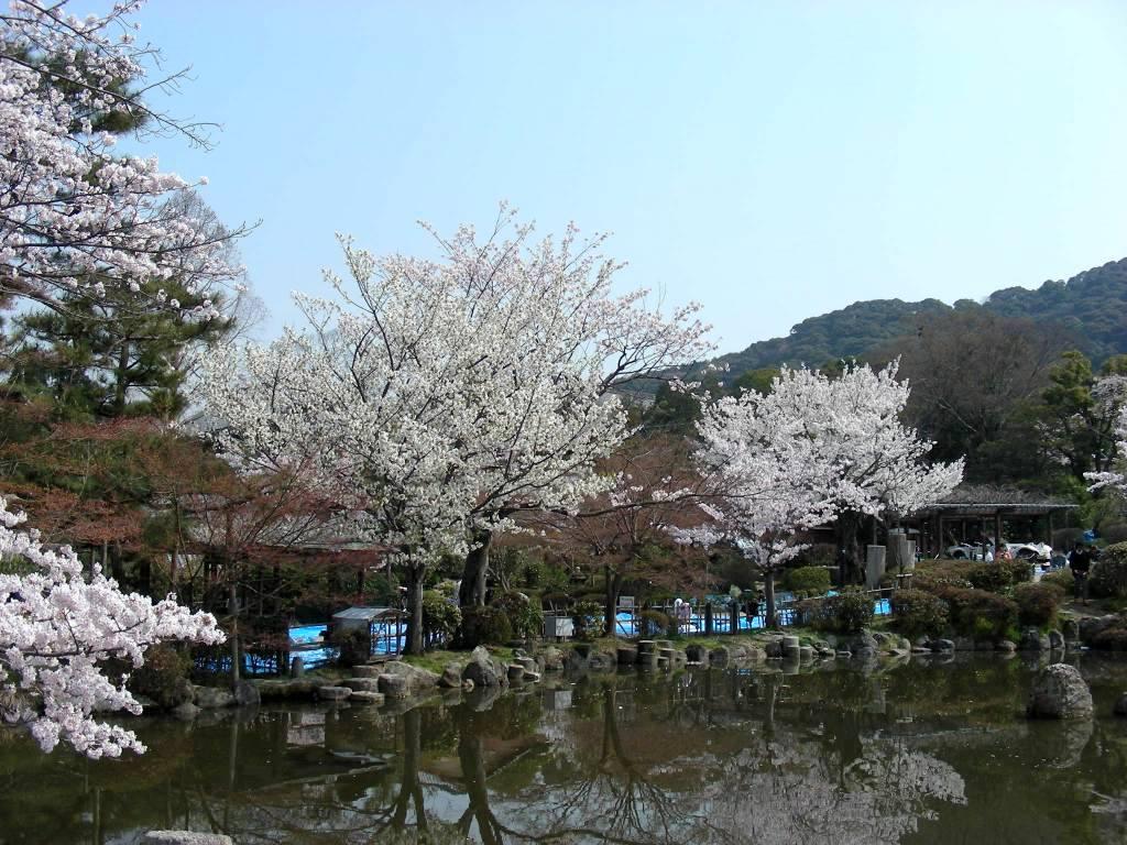 桜・円山、真如、哲学 053