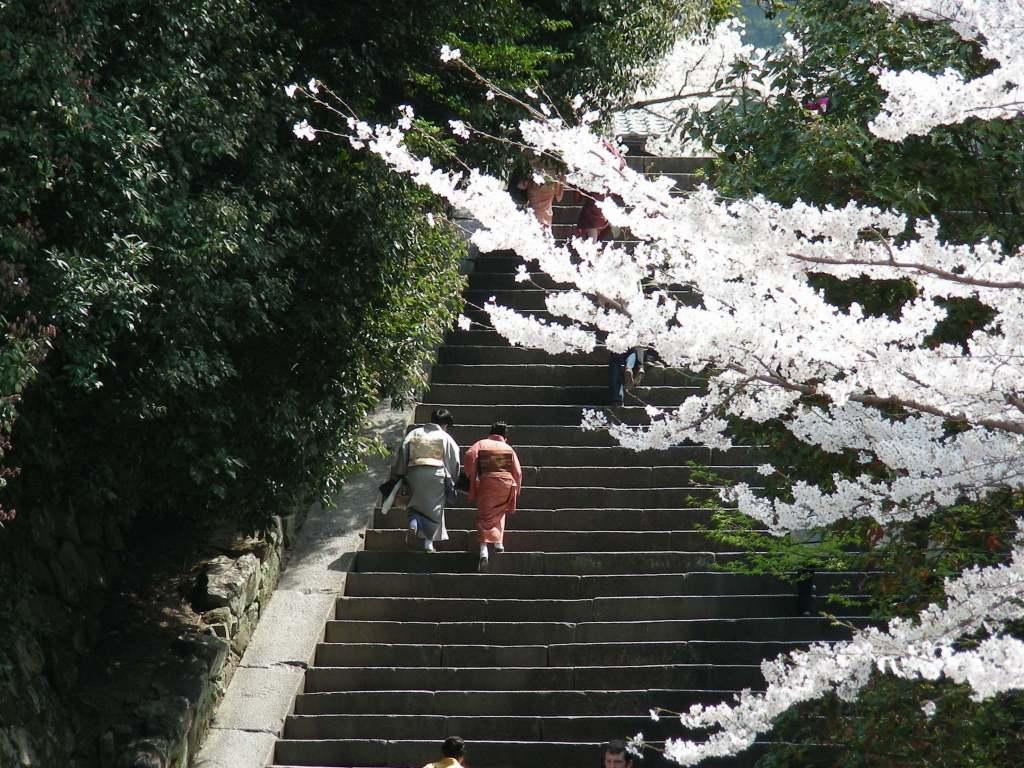 桜・円山、真如、哲学 118